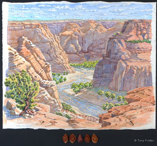 Canyon de Chelley Looking 25° North Northeast from below Junction Overlook. 18½ x 22½ / 2 x 9. pencil and watercolour on paper, peach stones, arrowhead by Homer Etherton