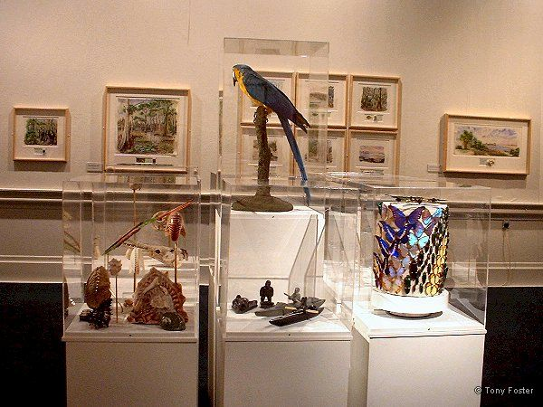 Watermarks exhibition and parrot tableau