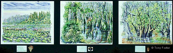 · Three Days Canoeing across the Okefenokee Swamp · -  Triptych each 11'' x 13¾   2'' x 4''