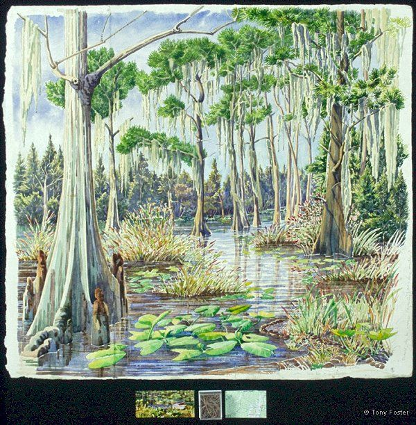 Okefenokee Swamp – Looking 250º from Gater Hole – 3 Days working in a canoe · -  22½'' x 24½''   2'' x 8''