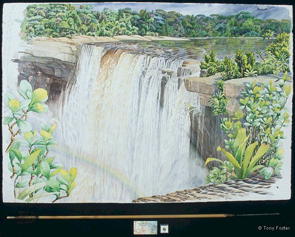 Kaieteur Falls looking S from Ranger Point · -  27½'' x 40½''   3'' x 39'' -